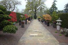About Herons Bonsai Bonsai Garden, Bonsai Trees, Bonsai Shop, Bonsai Nursery, Largest Waterfall, Miniature Trees, Elizabeth Banks, Chelsea Flower Show, Bonsai