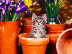 Kitten in a flower pot so cute