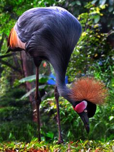Bill Giyaman posted Crane, Taman Mini Indonesia Indah to their -birds- postboard via the Juxtapost bookmarklet. Pretty Birds, Love Birds, Beautiful Birds, Animals Beautiful, Beautiful Pictures, Exotic Birds, Colorful Birds, Kinds Of Birds, Tier Fotos
