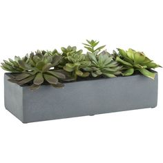 Crate & Barrel Artificial Succulents in a Pot featuring polyvore, home, home decor, floral decor, plants, fillers, flowers, decor, flower pots, handmade home decor, fake plants, artificial silk plants and terracotta flower pots
