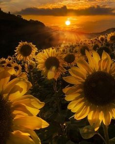 Breath taking Sunflowers Tumblr Wallpaper, Rose Wallpaper, Nature Wallpaper, Wallpaper Backgrounds, Sunflower Quotes, Wallpaper Fofos, Sunset Canvas, Sunflower Wallpaper, Sunflower Fields