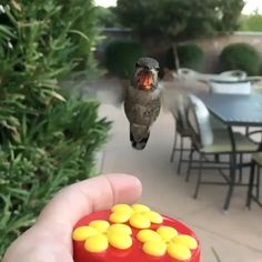C trop mignon Hummingbird cute video ple+ Cute Funny Animals, Cute Baby Animals, Cute Creatures, Beautiful Creatures, Nature Animals, Animals And Pets, Beautiful Birds, Animals Beautiful, Gato Gif