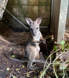 Pocket ❤️❤️❤️ Cincinnati Zoo, Kangaroo, Animals, Pocket, Instagram, Happy, Baby Bjorn, Animales, Animaux