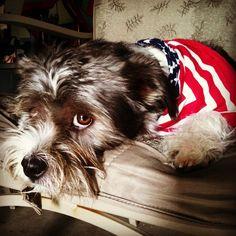 What?!?  @Tom John Cat #thetomcatlife #domino #dominodabone #dog #doggy #doggie #cute #cutie #brighteyes #bigeyes #bassethound #shihtzu