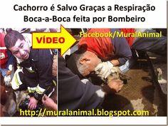Mural Animal: Cachorro é Salvo Graças a Respiração Boca-a-Boca f...