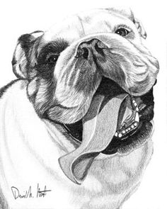 figurative - Bulldog by Dave the Drawing Guy