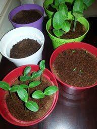 How to start your #vegetable #garden indoors! #zucchini #cucumber #strawberrys #thyme #veggies #vegetablegarden #gardening #yum #organic