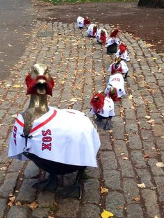 Mrs. Mallard and ducklings Jack, Kack, Lack, Mack, Nack, Ouack, Pack, and Quack doing their Red Sox Championship Walk