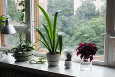 Kirppisrakkautta Flower Pots, Flowers, Glass Vase, Plants, Home Decor, Flower Vases, Plant Pots, Decoration Home, Room Decor