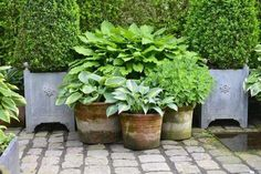 Increase Some Modern Day Design For Your Front Room With Art Deco Coffee Tables Hostaer I Krukker Back Gardens, Small Gardens, Outdoor Plants, Outdoor Gardens, Provence Garden, Backyard Ideas For Small Yards, Back Garden Design, Hosta Plants, Garden Urns