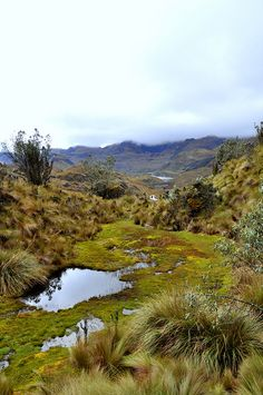 Cajas National Park, Ecuador. See ya in a couple months!