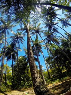 Tropical Rainforest Animals In Africa Panorama Of