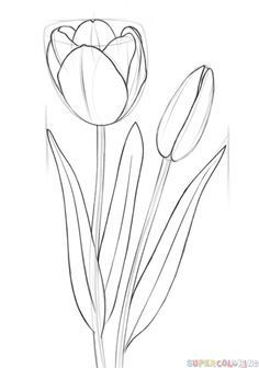 120 beste afbeeldingen van bloemen tekenen in 2020