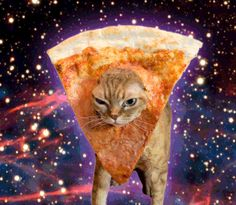 Pizza Cat Gifs | Caterville
