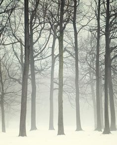Winter Wonderland Landscape Photography by EyePoetryPhotography, $30.00