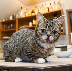 Bub the dwarf cat became an internet sensation after her owner dedicated a YouTube channel and Facebook page to her