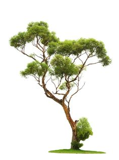 Arbre Png, Chinese Architecture, Landscape Architecture, - Beautiful Tree For Photoshop, Transparent Png - Full Size Transparent Png for free ( - PNGIX Watercolor Trees, Watercolor Paintings, Landscape Architecture, Landscape Design, Architecture Details, Tatoo Tree, Tree Photoshop, Tree Sketches, Tree Art