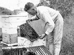 vintage photograph print Bee Keeper with his Hives Beekeeeper - Beekeeping
