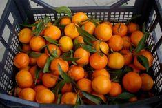 photo: Φιλάρετος Ψημμένος Orange, Fruit, Food, Essen, Meals, Yemek, Eten