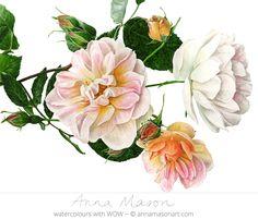 "Rose 'Treasure Trove' © 2012 ~ annamasonart.com ~ 31 x 41 cm (12"" x 16"")"