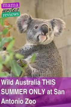 Australia is one of the most biodiverse countries in the world and the San Antonio zoo is bringing t Travel With Kids, Family Travel, Family Trips, Family Vacation Destinations, Travel Destinations, Family Vacations, Vacation Ideas, San Antonio Zoo, Jungle Boogie