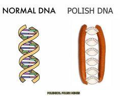 Top 22 Best Super Humour Images of The Day Physics Memes, Science Memes, Stupid Funny Memes, Funny Relatable Memes, Slovak Language, Polish Words, Polish Sayings, Polish People, Polish Memes