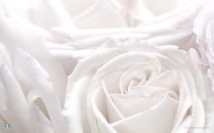 White Roses ~ God gave us our memories so that  we might have roses in December.  - Quote by J. M. Barrie