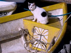 #Cat on a boat  Like,Repin,Share, Thanks!