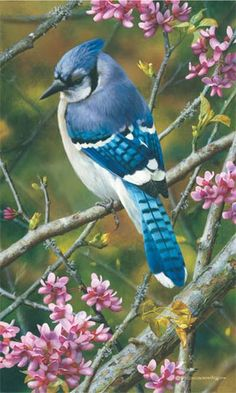 Flash Of Sapphire - Blue Jay by Carl Brenders          Details: 14 x 8 1/2;Offset Paper;Edition Size 2500