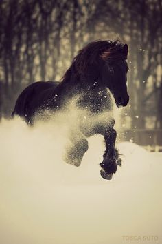 Beautiful picture. #horse #snow #beautiful