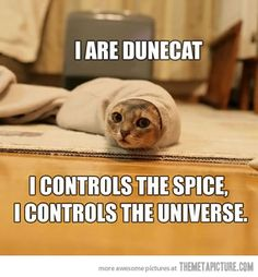 Dune. The Spice. The Worm. The Cat.