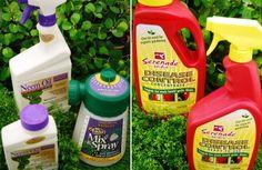 Natural and Organic Disease Control