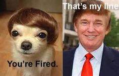 dog trump - - Yahoo Image Search Results