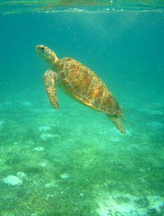 Kuredu Island, Maldives Copyright: Yvan Jonneret
