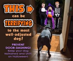Home Dog Training. Dog Behavior, socialization and Training. Customized Dog Training Methods – Be the Leader Your Dog Loves, Trusts & Respects Happy Halloween, Halloween Cans, Rescue Dogs, Animal Rescue, Animal Shelter, Pet Store Puppies, Dog Safety, Safety Tips, Dog Behavior