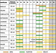 Les plantes aromatiques : calendrier de semis, plantation et récolte à garder sous la main !