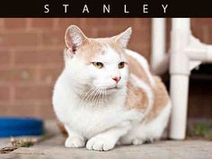 Stanley (A616088)