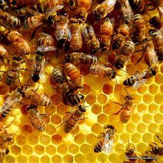 A Look Inside a New Honey Bee Hive - Montana Homesteader