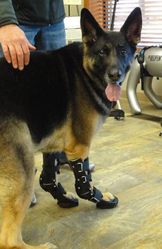 20 Best Carpal Braces for Dogs images in 2018 | Dog leg