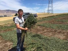 Nate visits the organic mint farm for Mountain Rose Herbs!