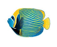 Blue Gold AngelFish Image, Fish Template, Large Poster Art, Kids Nursery Room…