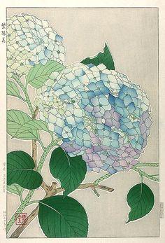Hydrangea by Kawarazaki Shodo (published by Unsodo)