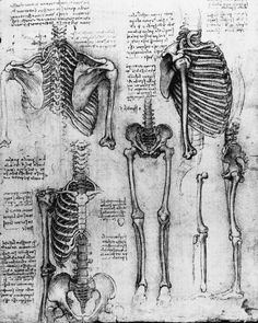 Drawings by Leonardo da Vinci... orthogonal views of the skeleton (c 1510-11). (From the collection of Her Majesty the Queen).  Can't imagine why I've always been partial to Maestro Leonardo's work.:-D