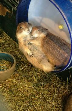 These cuddling love-bugs.   32 Adorable Animals Who Have Found Their True Love