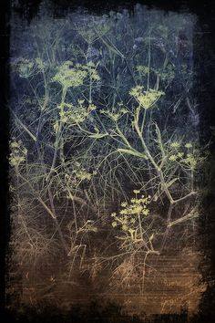 workman: tinktastichana: Sometimes I touch the.Sometimes I touch the things you used to touch, looking for echoes of your fingers. Silk Painting, Painting & Drawing, Gravure Photo, Illustration Art, Illustrations, Botanical Illustration, Encaustic Art, Art Graphique, Queen Anne