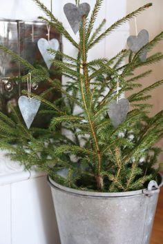 Small trees in buckets!  nordingården: Jul