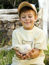 Teach Kids with Chickens: Whether they're in the classroom, on a farm or in your own backyard, chickens are ready to teach your kids about a lot more than the three Rs. Article by Hobby Farms Mag with links to student lessons Chickens and Elementary Students, Science, History, Literature, and Chicken Projects at Home