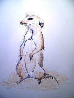 Suricata suricatta (Surikata) by Adisida on DeviantArt My Drawings, A4, Markers, Clip Art, Deviantart, Animales, Sharpies, Marker, Sharpie Markers
