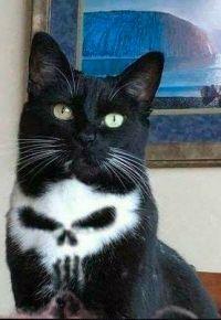 Bakugo Catsuki - Boku no Hero Academia - Gatos Cute Funny Animals, Cute Baby Animals, Funny Cats, Cats Humor, Kids Animals, Funny Humor, Funny Quotes, I Love Cats, Crazy Cats