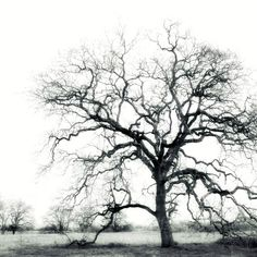 Black and White Winter tree photography tree by LupenGrainne, $30.00  Would this not be a fabulous mural, enlarged onto wall-paper?